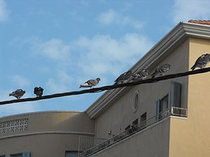 300px-PikiWiki_Israel_7304_Birds_on_a_Wire