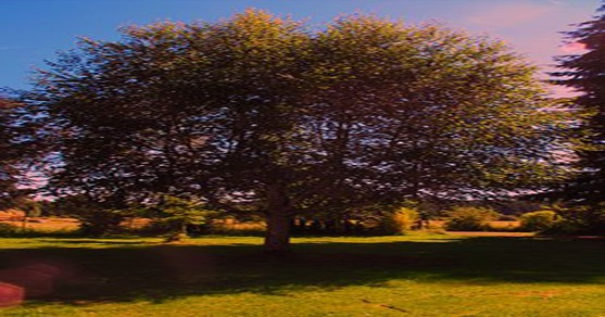 Tree on the Cahill farm
